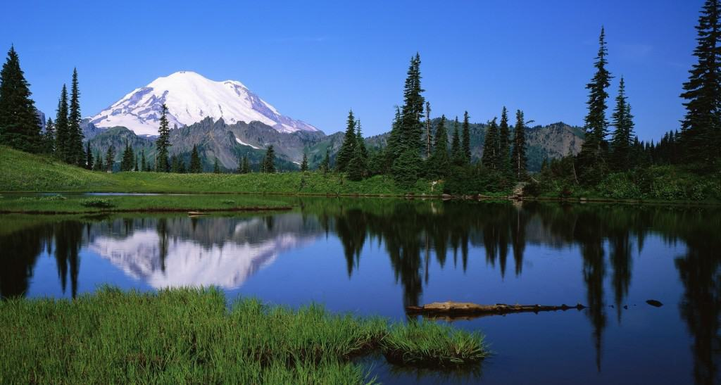 mount-rainier-national-park-grass-mountains-lake-mount-rainier-nature